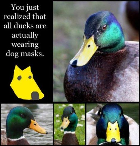 ducks wear dog masks