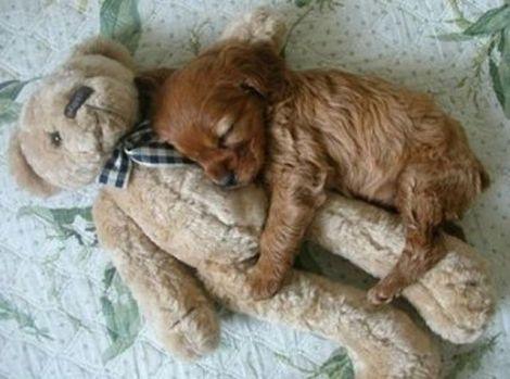 puppy cuddles teddy bear