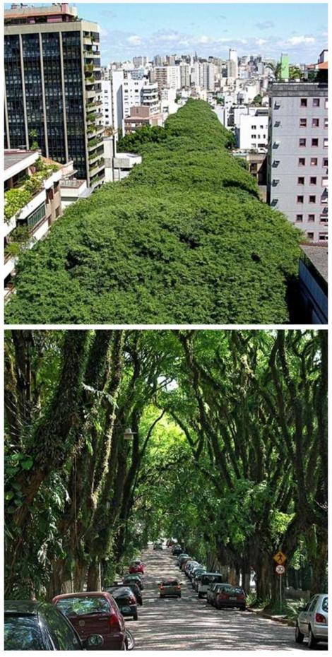 Green Urban Tunnel