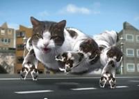 kittycitywtfvideo