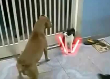 Cat Fights Dog Off With Lightsaber
