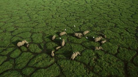 Elephants in the Wetlands
