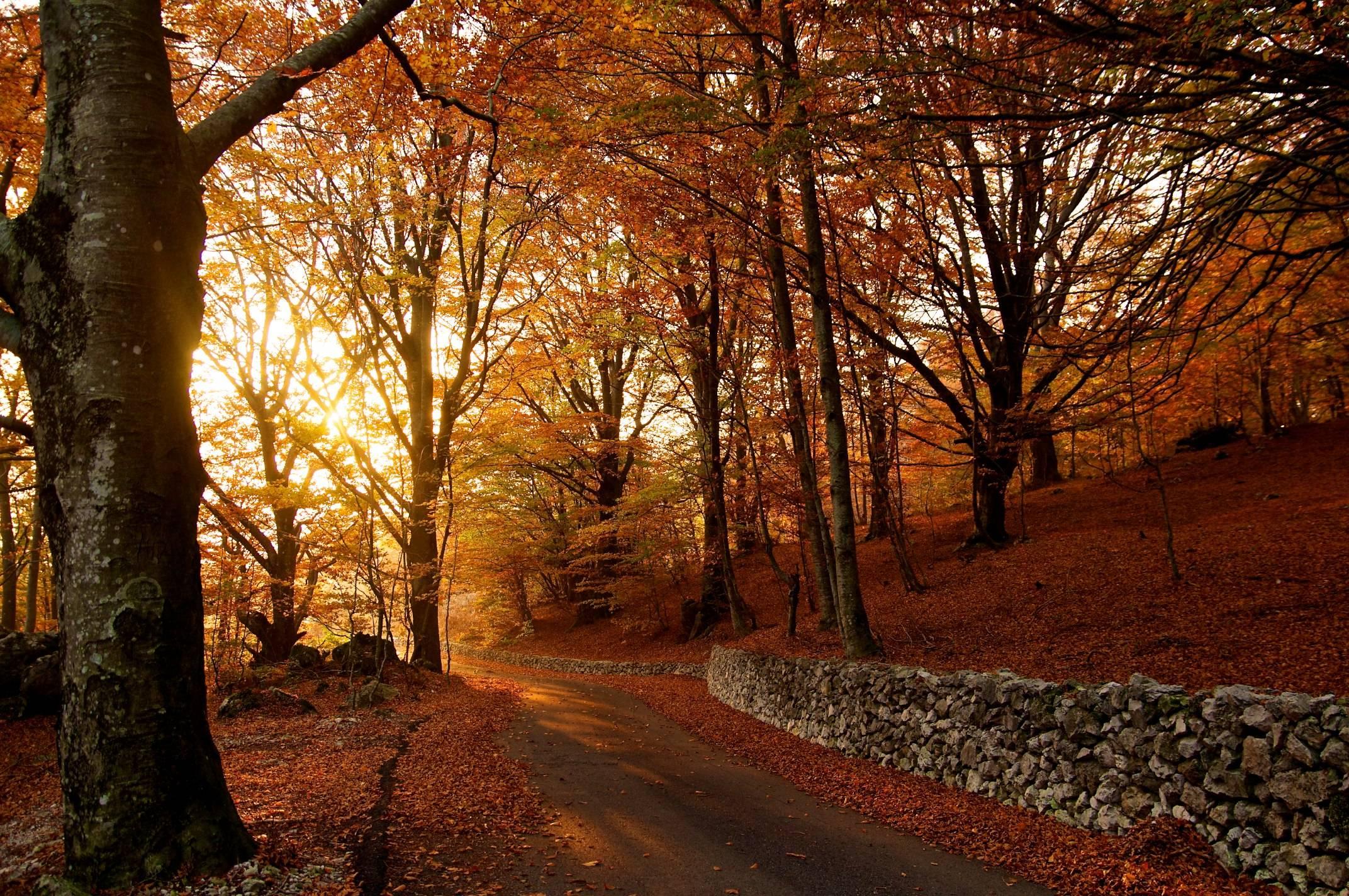 Autumn Road HD desktop wallpaper High Definition Fullscreen